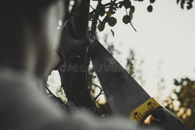 锯在庭院里看见了 免版税图库摄影