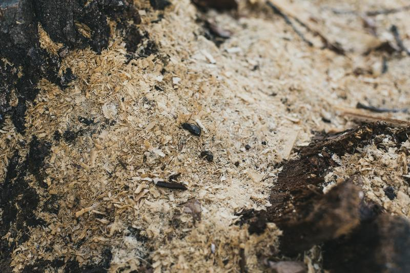 锯木屑看见了切开 锯的废物,环境问题 在木吠声的芯片 人们锯了木头入片断 免版税图库摄影