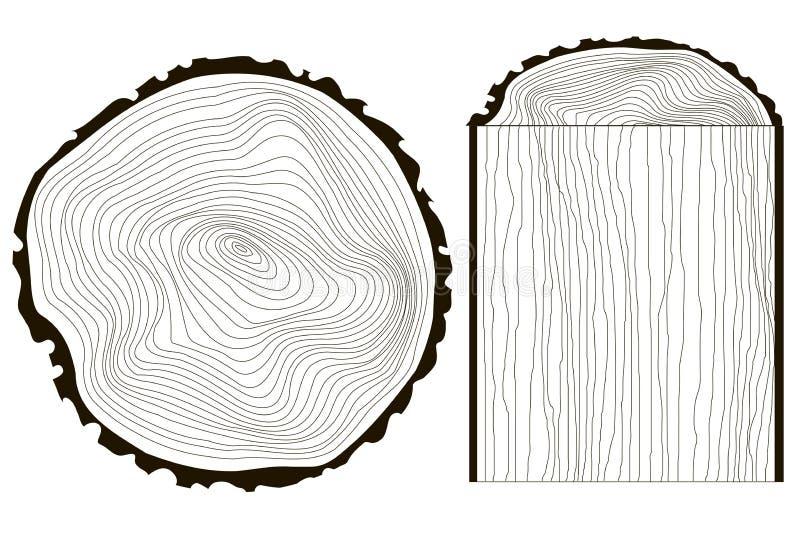 锯砍树干传染媒介树,单色的年轮 库存例证