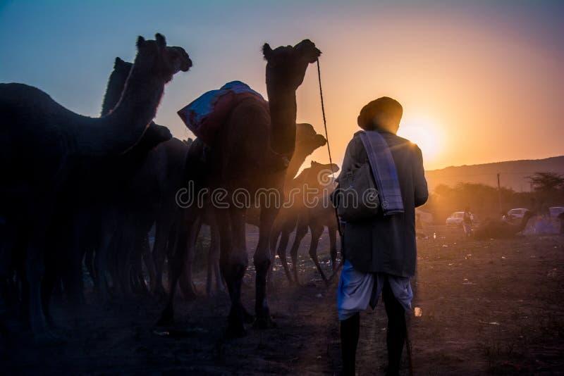镇定骆驼的他的牧群骆驼所有者在骆驼市场在普斯赫卡尔,拉贾斯坦,印度 图库摄影