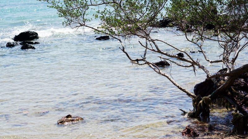 镇静热带海滩 免版税库存照片