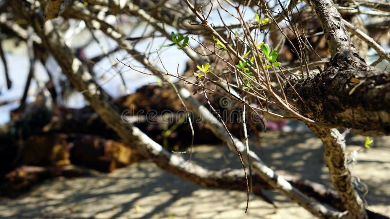 镇静热带海滩 图库摄影