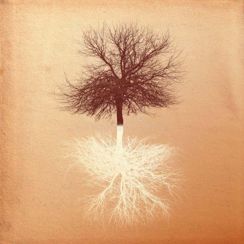 镜子结构树 向量例证