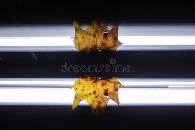 镜子被反射的秋天叶子 图库摄影