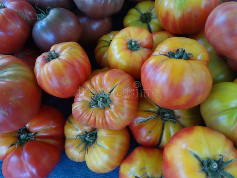 镶边德国蕃茄,茄属lycopersicum '镶边了德国人' 免版税图库摄影