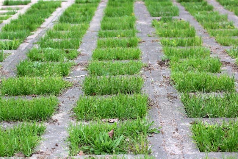 镶边绿草纹理有透视图 草坪的部分石头的 库存照片