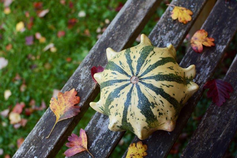 镶边铁海棠在秋天中的装饰金瓜离开 免版税图库摄影
