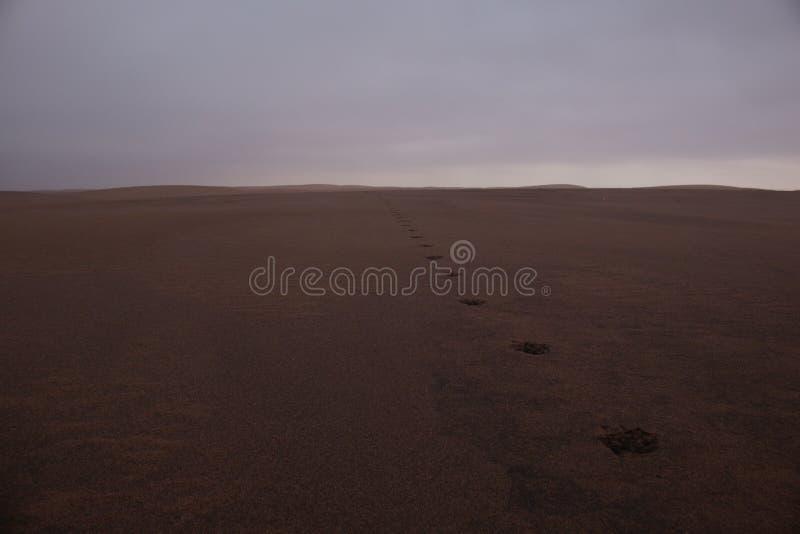 镶边鬣狗爪子印刷品特写镜头在纳米比亚沙漠沙子,纳米贝省,安哥拉 库存图片