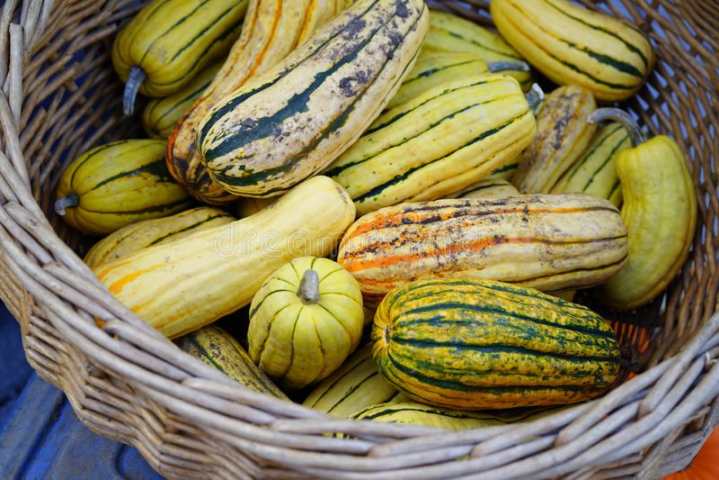 镶边黄色和绿色delicata南瓜篮子在秋天的 免版税库存照片