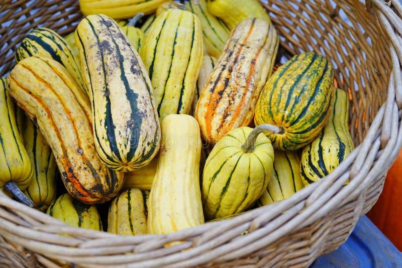 镶边黄色和绿色delicata南瓜篮子在秋天的 免版税库存图片