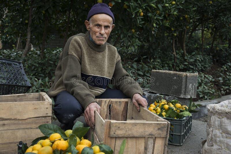 年长农夫带来了桔子待售 免版税库存图片