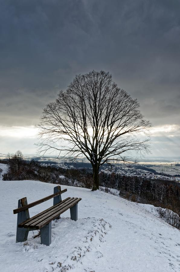 长凳和树在下雪在冬天风景 免版税库存图片