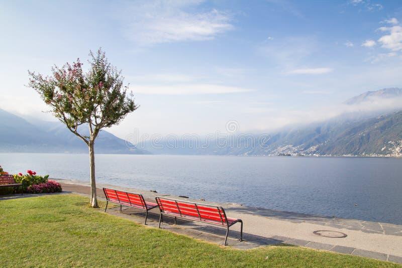 长凳和树在瑞士湖 免版税库存图片