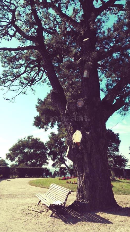 长凳和树背景葡萄酒 库存图片