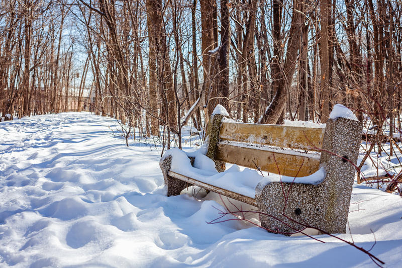 长凳在多雪的公园在冬天 好的安排 免版税库存图片