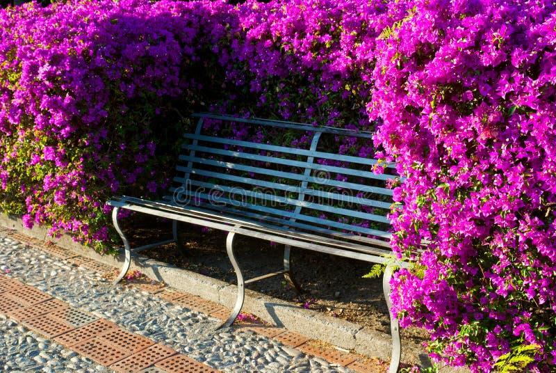 长凳在开花的公园 免版税库存图片