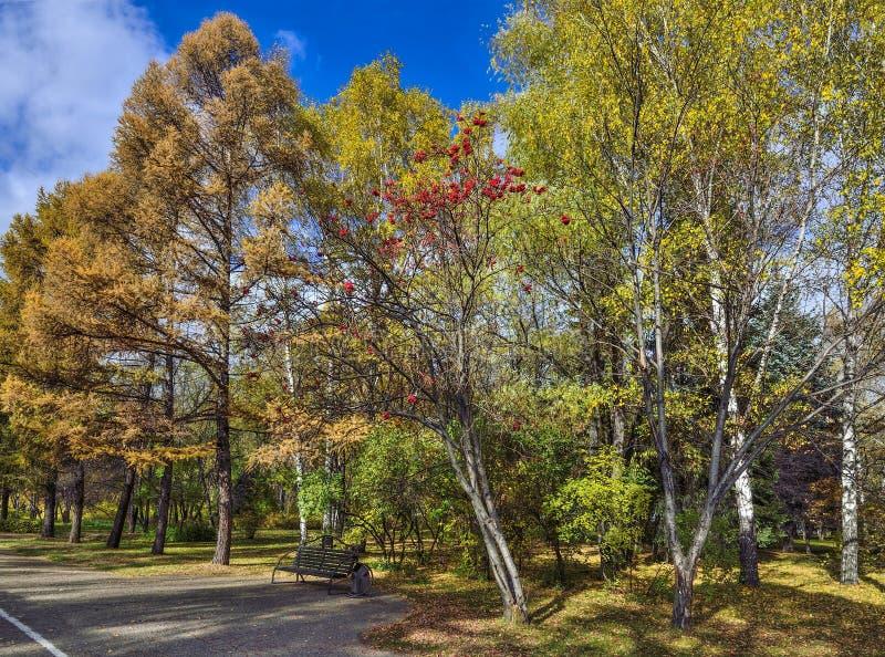 长凳在秋天城市公园 免版税库存图片