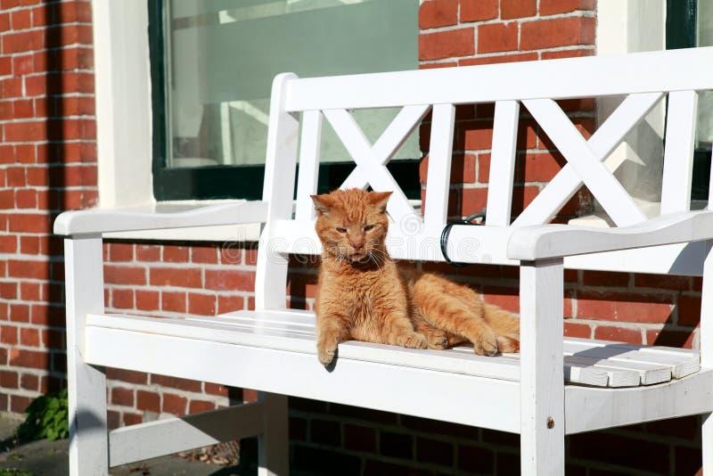 长凳猫 库存图片