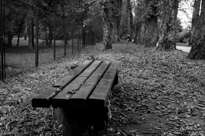长凳空的公园 免版税库存照片
