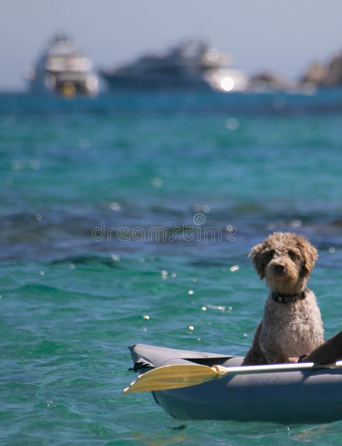 长卷毛狗在一个可膨胀的独木舟坐蓝色海 库存图片