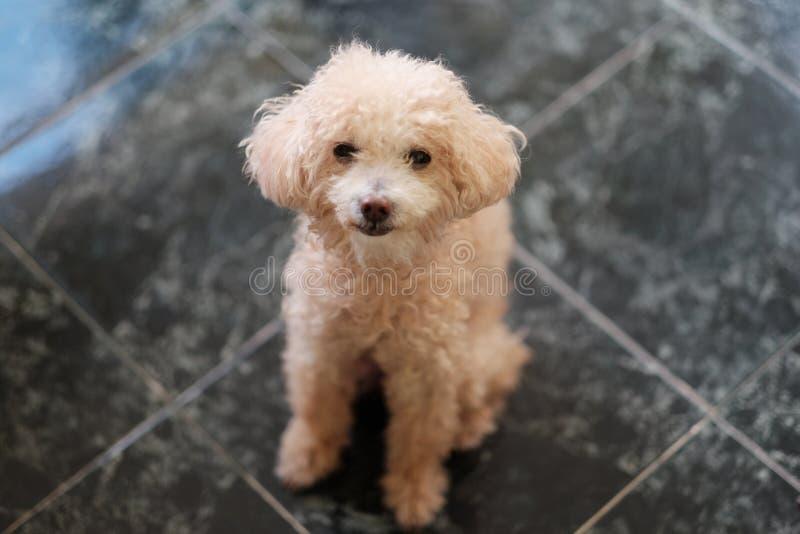 长卷毛狗玩具,可爱的狗 库存图片