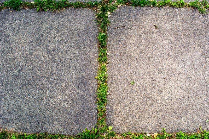 长大在庭院关闭的水泥板材的草 库存照片