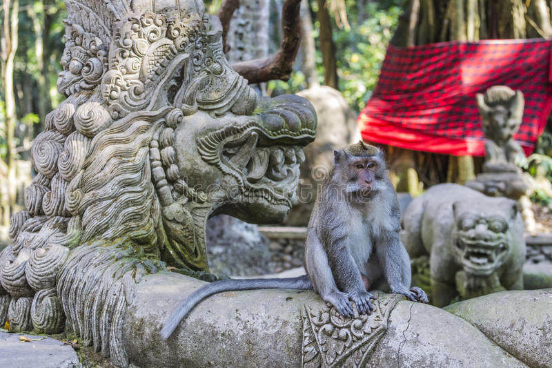 长尾的短尾猿(猕猴属fascicularis)在前面神圣的猴子 免版税图库摄影