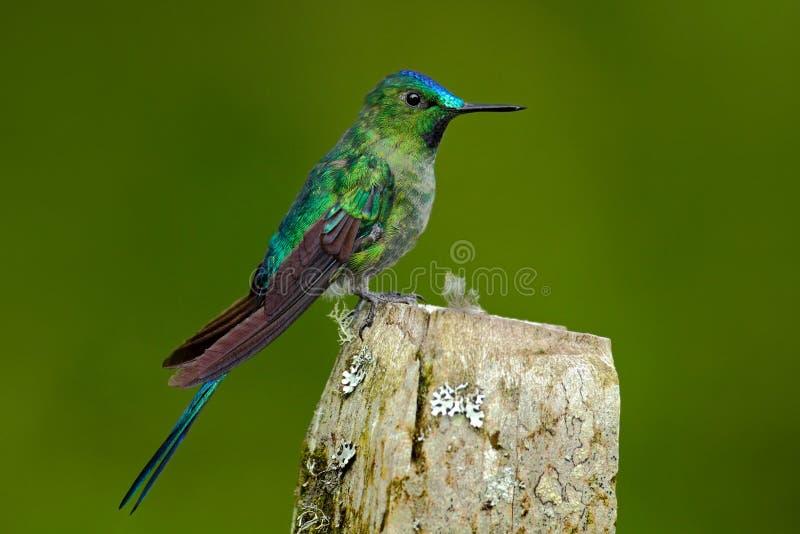 壁纸 动物 昆虫 鸟 鸟类 雀 桌面 800_533