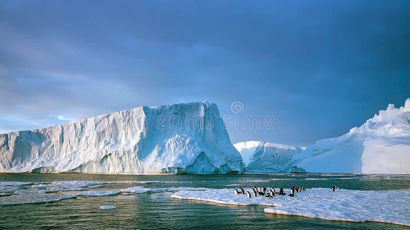 长尾的gentoo企鹅是在类Pygoscelis,南极半岛,南极洲的一个企鹅种类 免版税图库摄影