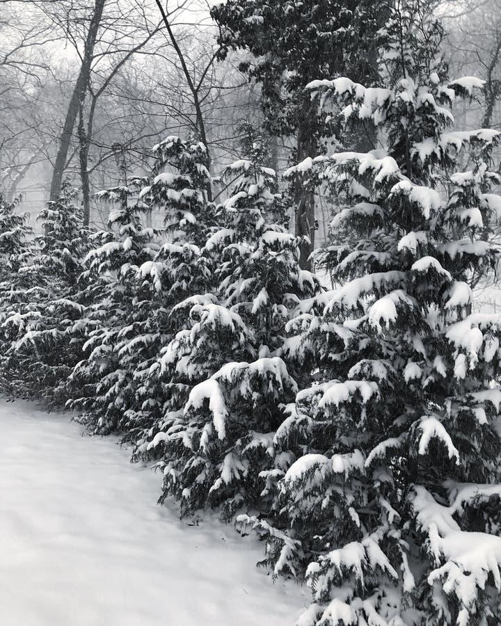 长岛降雪 免版税库存图片