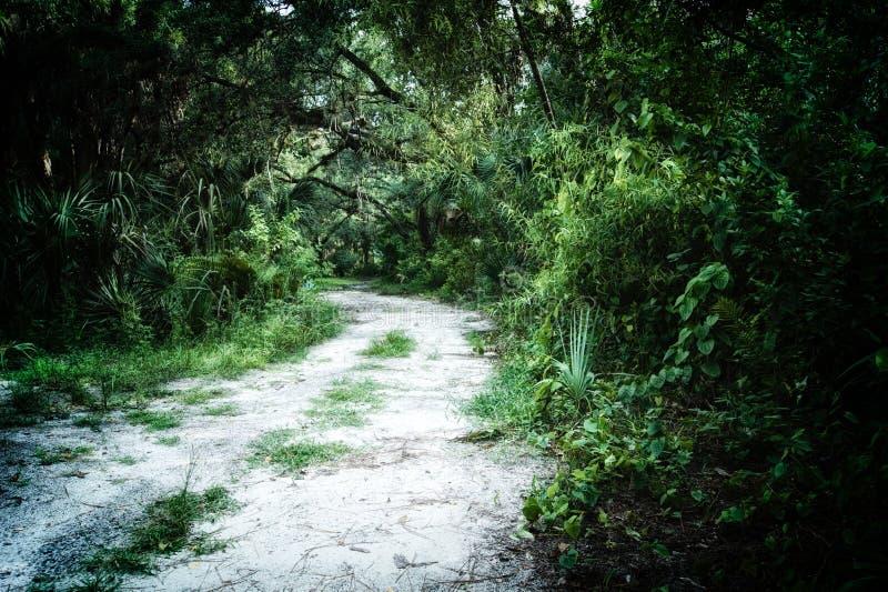 长得太大的土路在密林 图库摄影