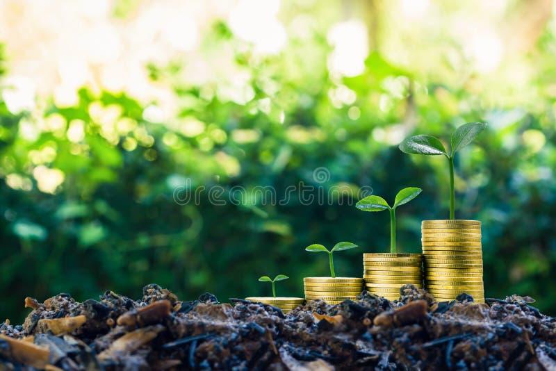 长期投资或赚钱与正确的概念 在堆的植物生长在好土壤的硬币与绿色自然  免版税库存照片