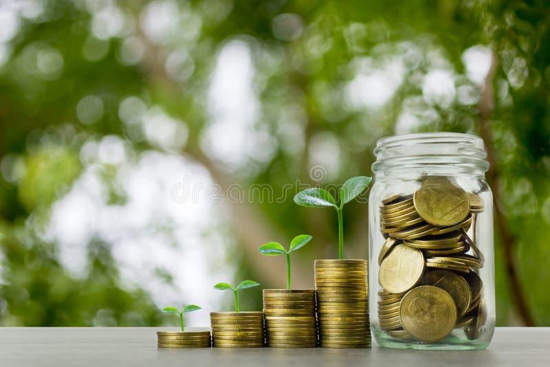 长期投资或赚钱与正确的概念 在堆的植物生长在木桌上的硬币与充分的硬币 库存图片