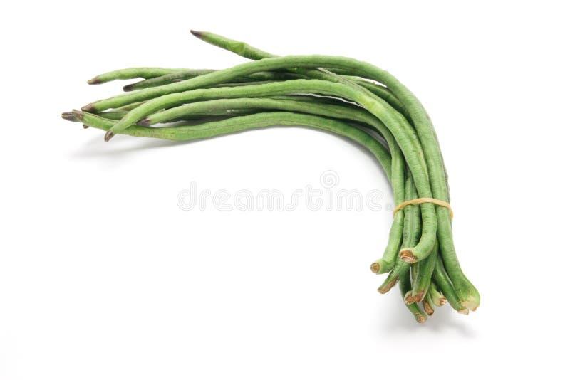 长期豆 免版税库存图片