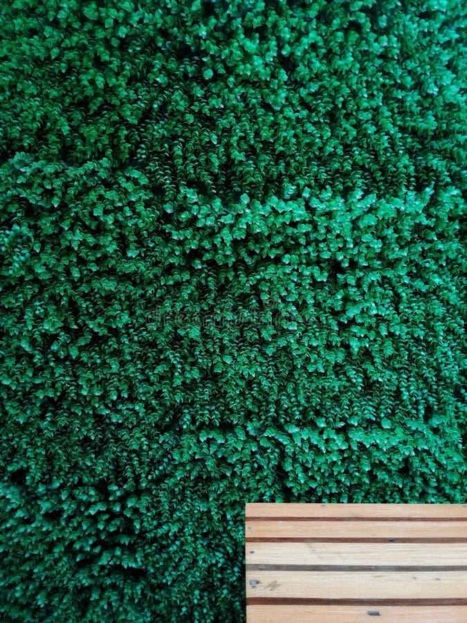 长木凳后面架靠背有绿色植物背景 免版税图库摄影