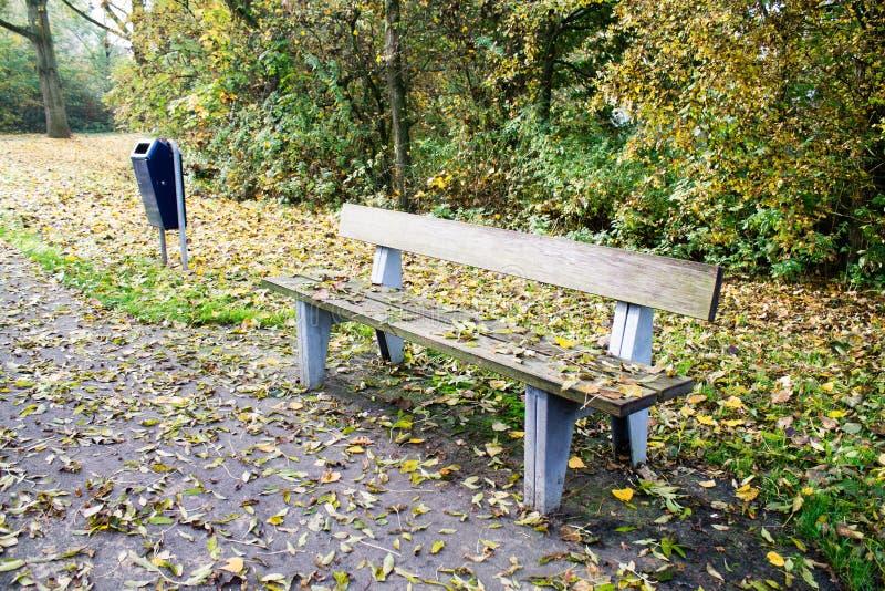 长木凳和一条道路在夏季的公园 免版税图库摄影