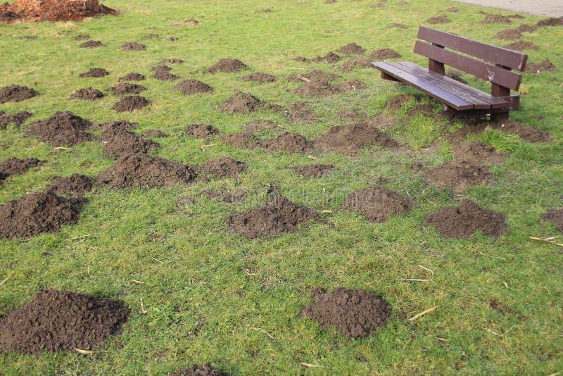 长木凳和许多田鼠窝在春天 图库摄影