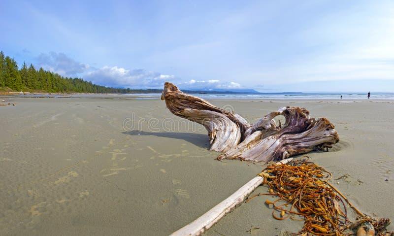 长滩在托菲诺,温哥华岛,加拿大全景  免版税图库摄影