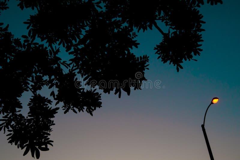 长滩,加利福尼亚天空的植物  加利福尼亚是否认识与好位于夏时的美国,相互 免版税库存图片
