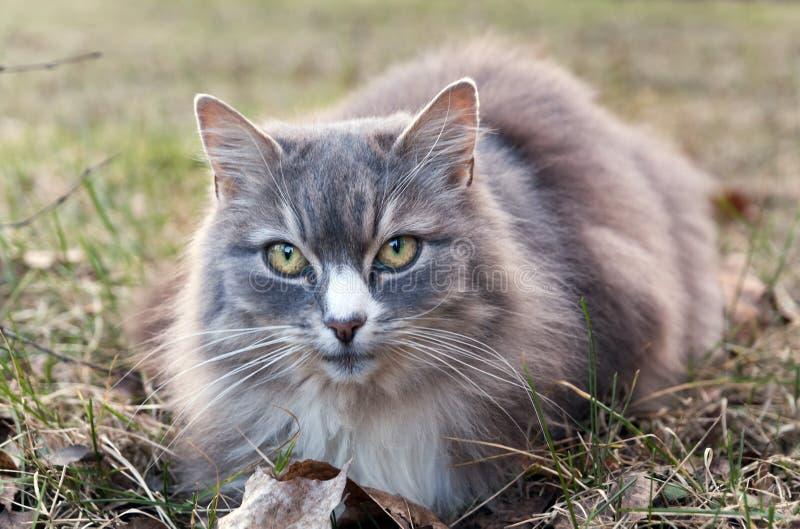 年长猫 库存照片