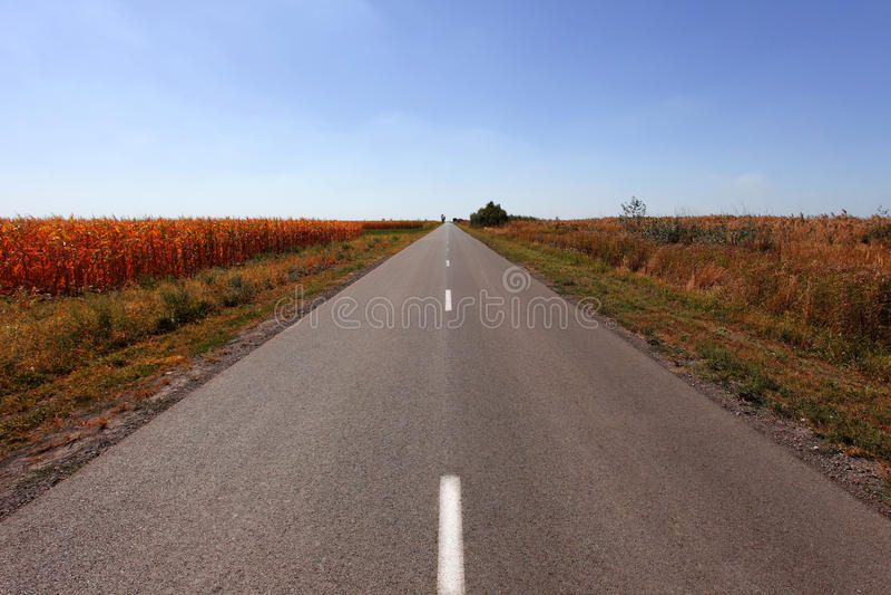 长的平直的乡下路 免版税库存照片