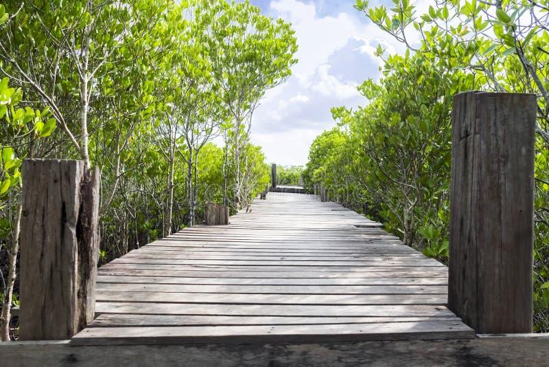 长的木桥梁在美洲红树森林里 免版税库存照片