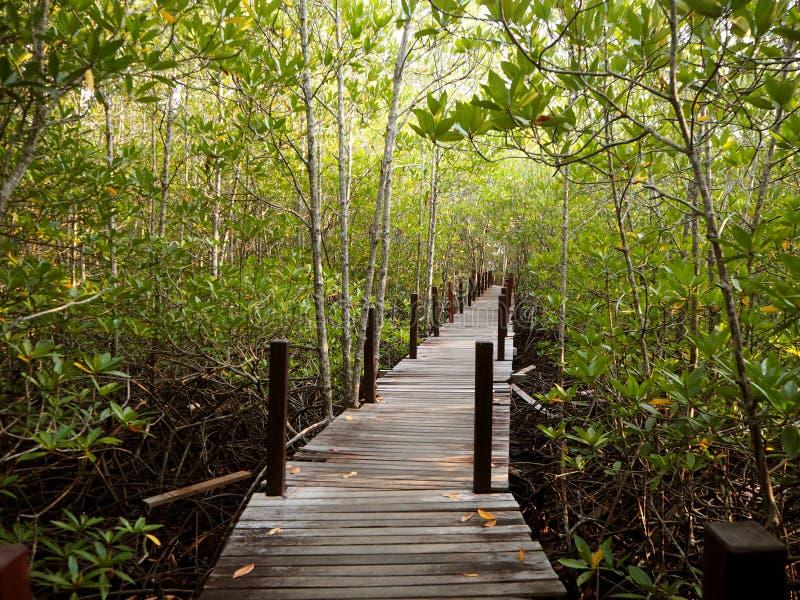 长的木桥梁在美洲红树森林,泰国里 免版税库存图片