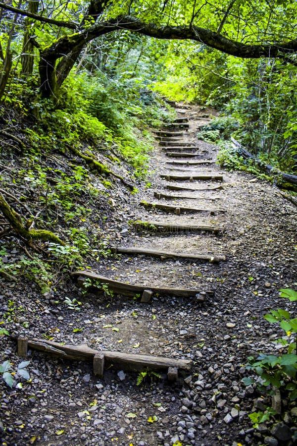 长的木楼梯 免版税图库摄影