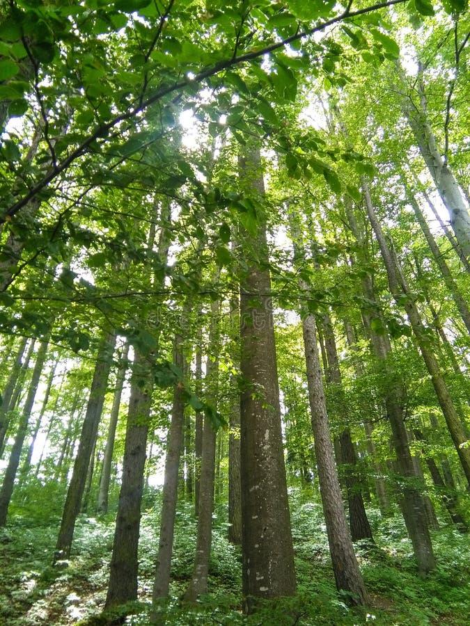 长的树 库存图片
