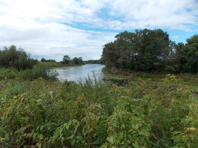 长的森林湖的美丽的景色有绿草的在银行 图库摄影