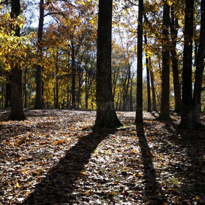 长的阴影从在秋天设置的许多树熔铸了 库存照片
