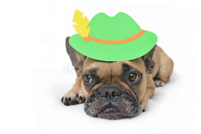长着大眼睛的可爱法国斗牛犬,戴着传统的德国蒂罗尔啤酒节礼帽 图库摄影