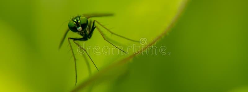 长腿的镀铬物蓝色,绿色和橙色Robo飞行 免版税库存图片