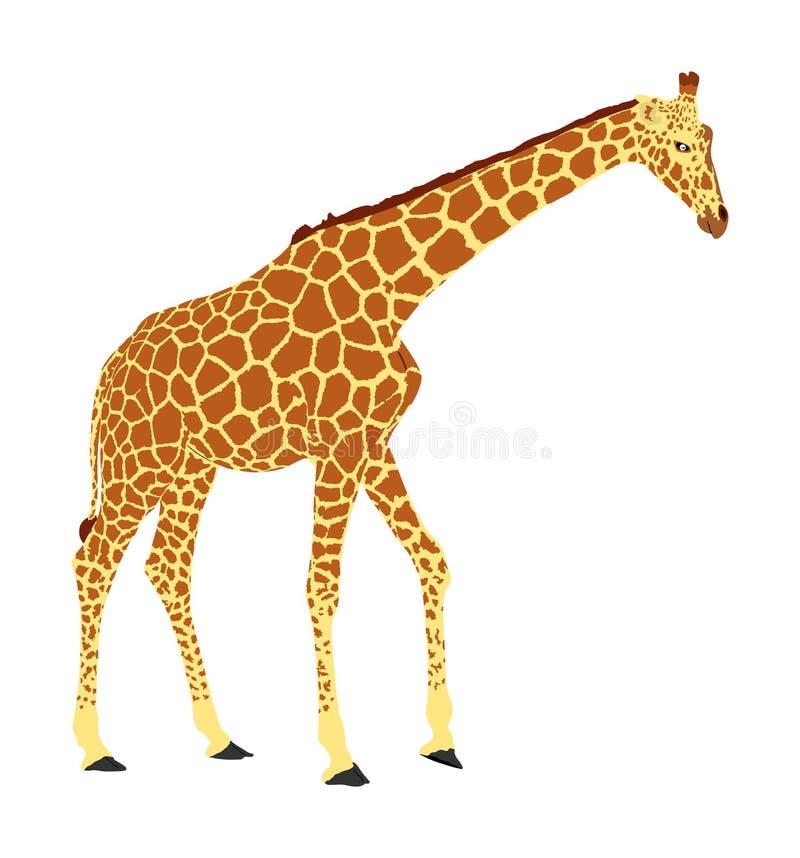 长颈鹿在白色背景隔绝的传染媒介例证 库存例证